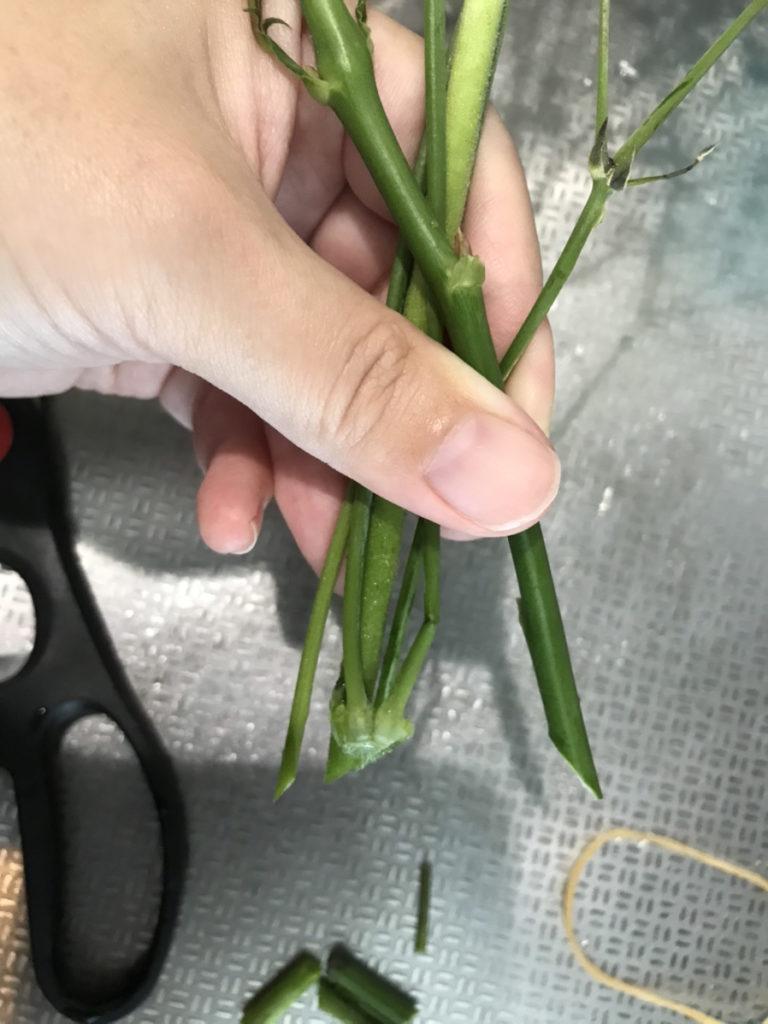 ブルーミーライフ実際に届いた花
